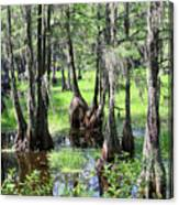 Florida Swamp Canvas Print