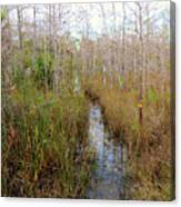 Florida Trail Big Cypress Canvas Print