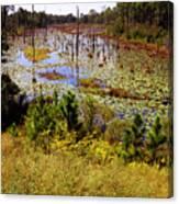 Florida Wetland Canvas Print