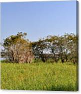 Florida Wetlands Panoramic Canvas Print