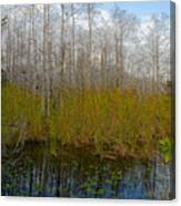 Florida Wilderness Canvas Print