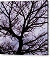 Floss Silk Tree Canvas Print