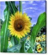 Flower # 38 Canvas Print