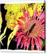Flower 23af, Ny, 16 Canvas Print