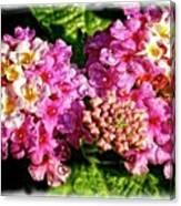 Flower 23f, Ny, 16 Canvas Print