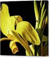 Flower 29f, Ny, 16 Canvas Print