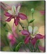 Flower 3506_2 Canvas Print