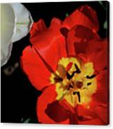 Flower 55 Canvas Print