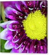 Flower And Droplets Canvas Print