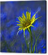 Flower And Flax Canvas Print