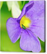 Flower And Grasshopper-st Lucia Canvas Print