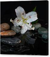 Flower And Stone Canvas Print