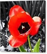 Flower As Art Canvas Print