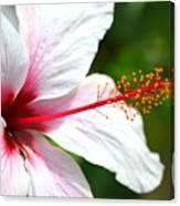 Flower Beauty Canvas Print