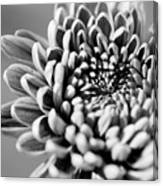 Flower Black And White Canvas Print