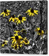 Flower Black Eyed Susan Canvas Print