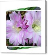 Flower Blossom Pink Canvas Print