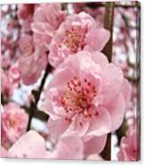 Flower Blossoms Art Spring Trees Pink Blossom Baslee Troutman Canvas Print