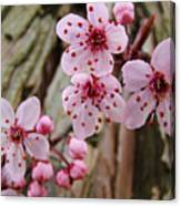 Flower Blossoms Pink Tree Blossoms Art Print Giclee Spring Flowers Canvas Print