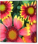 Flower Burst Canvas Print