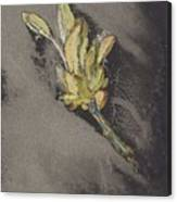 Flower, Carel Adolph Lion Cachet, 1874 - 1945 Canvas Print