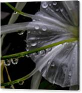 Flower Close Up Canvas Print