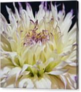Flower Dahlia. Macro Canvas Print