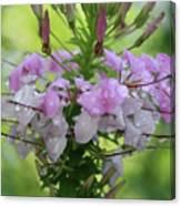 Flower Dew Beauty Canvas Print