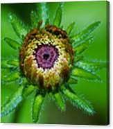 Flower Eye Canvas Print