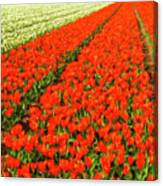 Flower Farm 2 Canvas Print