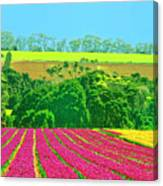 Flower Farm And Hills Canvas Print