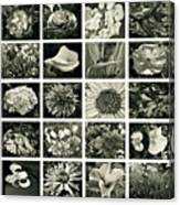 Flower Favorites Bw Canvas Print