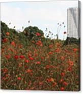 Flower Field In Hama-rikyu Gardens Canvas Print