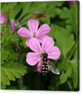 Flower Fly On Stinky Bob Canvas Print
