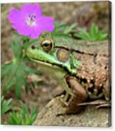 Flower, Frog, Fly Canvas Print