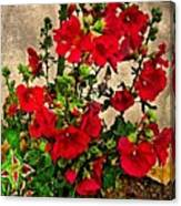 Flower Garden 11 Canvas Print