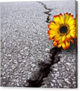 Flower In Asphalt Canvas Print