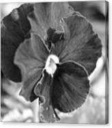 Flower In Garden Canvas Print