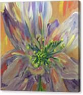 Flower In Morning Light Canvas Print