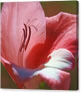 Flower In Pink Pastel Canvas Print