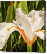 Flower In The Grass Canvas Print
