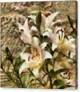 Flower - Lily - White Lily Canvas Print