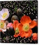 Flower Line Dance Canvas Print