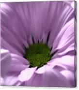Flower Macro Beauty 3 Canvas Print