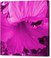 Flower Maddness Canvas Print