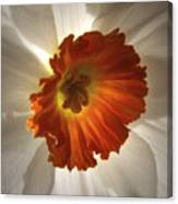 Flower Narcissus Canvas Print