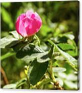 Flower Of Eglantine - 2 Canvas Print