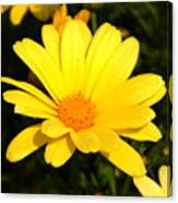 Flower Of Sunshine Canvas Print