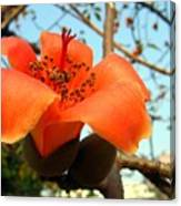 Flower Of The Red Silk Cotton Tree  Canvas Print