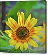 Flower Of The Sun Canvas Print